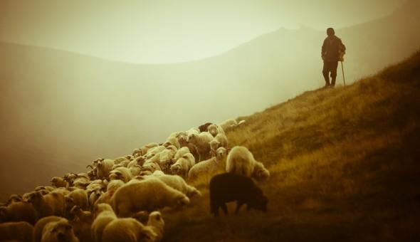pastor_de_ovelhas